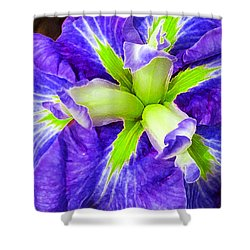 Boothbay Violet With Chartreuse Shower Curtain by Bill Caldwell -        ABeautifulSky Photography
