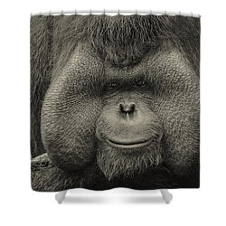 Bornean Orangutan II Shower Curtain by Lourry Legarde