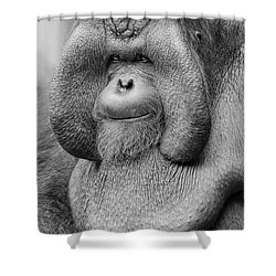 Bornean Orangutan IIi Shower Curtain by Lourry Legarde