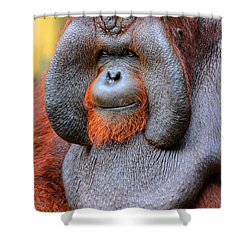 Bornean Orangutan Iv Shower Curtain by Lourry Legarde