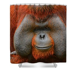 Bornean Orangutan Shower Curtain by Lourry Legarde
