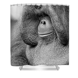 Bornean Orangutan V Shower Curtain by Lourry Legarde