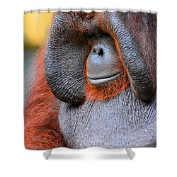 Bornean Orangutan Vi Shower Curtain by Lourry Legarde