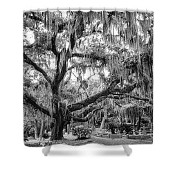 Bosque Bello Oak Shower Curtain by Dawna  Moore Photography