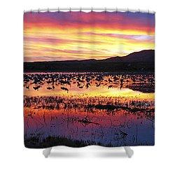 Bosque Del Apache Shower Curtain by Steven Ralser