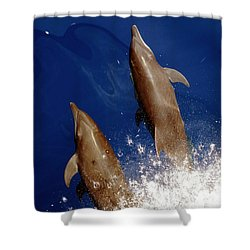 Bottlenose Dolphins Tursiops Truncatus Shower Curtain by Anonymous