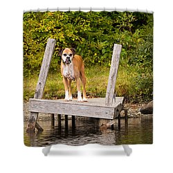 Boxer On Lake Dock Shower Curtain by Stephanie McDowell
