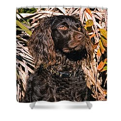 Boykin Spaniel Portrait Shower Curtain by Timothy Flanigan