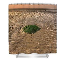 Breeze Of Dawn Shower Curtain by Evelina Kremsdorf