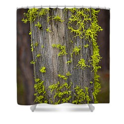 Bright Green Lace Shower Curtain by Omaste Witkowski