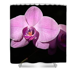 Bright Orchid Shower Curtain by Penny Lisowski