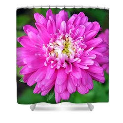 Bright Pink Zinnia Flowers Shower Curtain by Christina Rollo
