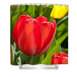 Bright Red Tulip Shower Curtain by Karol Livote