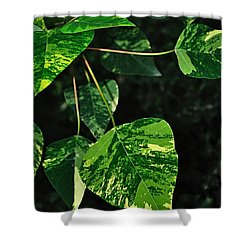 Bright Variegated Leaves Shower Curtain by Kaye Menner