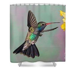 Broad-billed Hummingbird Shower Curtain by Jim Zipp