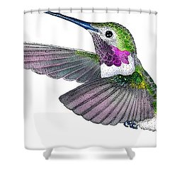 Broad-tailed Hummingbird Shower Curtain by Roger Hall
