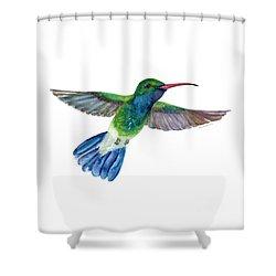 Broadbilled Fan Tail Hummingbird Shower Curtain by Amy Kirkpatrick
