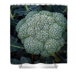 Broccoli Shower Curtain by Robert Bales