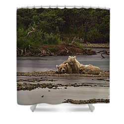 Brown Bear And Cubs Taking A Break From Fishing For Salmon Shower Curtain by Dan Friend