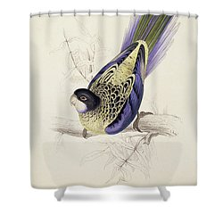 Browns Parakeet Shower Curtain by Edward Lear