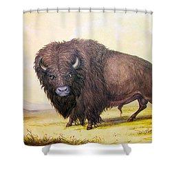 Bull Buffalo Shower Curtain by George Catlin
