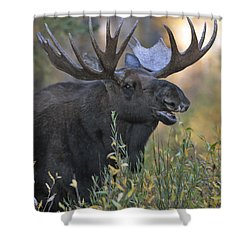 Bull Moose Calling Shower Curtain by Gary Langley