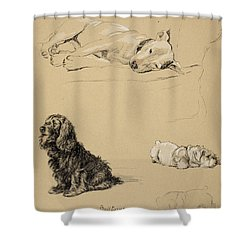 Bull-terrier, Spaniel And Sealyhams Shower Curtain by Cecil Charles Windsor Aldin