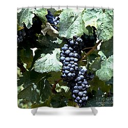 Bunch Of Grapes Shower Curtain by Heiko Koehrer-Wagner