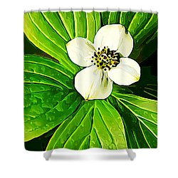 Bunchberry Blossom Shower Curtain by Bill Caldwell -        ABeautifulSky Photography