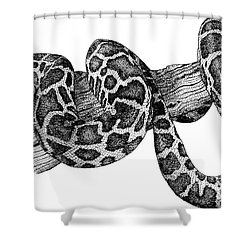 Burmese Python Shower Curtain by Roger Hall