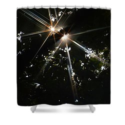 Bursting Through Trees Shower Curtain by Donna Blackhall