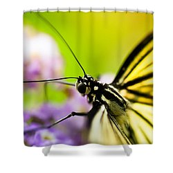 Butterfly Shower Curtain by Sebastian Musial