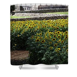 Buttonwood Shower Curtain by Michelle Welles