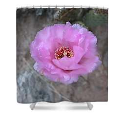 Cactus Flower Shower Curtain by Crystal Magee