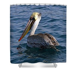 California Brown Pelican Shower Curtain by Shoal Hollingsworth