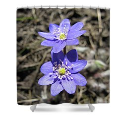 Calling Spring. Two Violets Shower Curtain by Ausra Huntington nee Paulauskaite