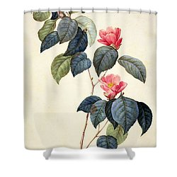 Camellia Japonica Shower Curtain by Pierre Joseph Redoute
