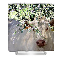 Can You See Me Now? Shower Curtain by Dorothy Menera