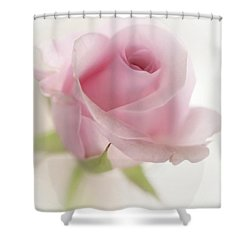 Candy Floss Shower Curtain by Morag Bates