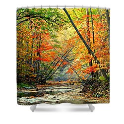 Canopy Of Color II Shower Curtain by Frozen in Time Fine Art Photography