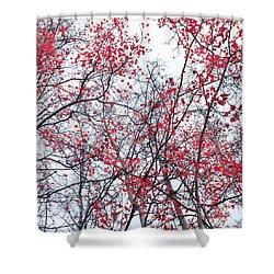 Canopy Trees Shower Curtain by Priska Wettstein