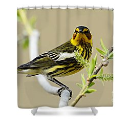 Cape May Warbler Shower Curtain by Larry Ricker