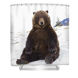 Captive Grizzly During Winter Sits Shower Curtain by Doug Lindstrand