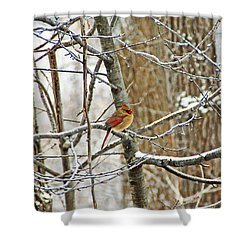 Cardinal In Winter Shower Curtain by Aimee L Maher Photography and Art Visit ALMGallerydotcom