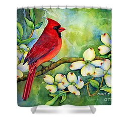 Cardinal On Dogwood Shower Curtain by Hailey E Herrera