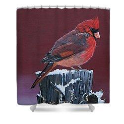 Cardinal Winter Songbird Shower Curtain by Sharon Duguay