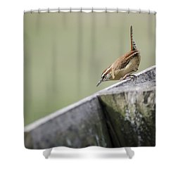 Carolina Wren Two Shower Curtain by Heather Applegate