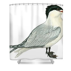Caspian Tern Shower Curtain by Anonymous