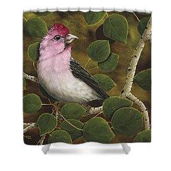 Cassins Finch Shower Curtain by Rick Bainbridge