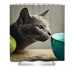 Cat And Pears Shower Curtain by Nailia Schwarz